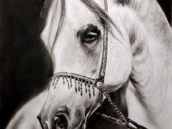 طراحی اسب سفید